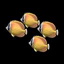 Butterfly-Fish Model