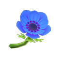 Blue Windflowers