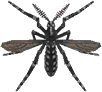 Mosquito NH.png