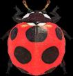 Artwork of Ladybug