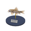 Nibble Fish Model