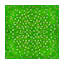 Daisy Meadow HHD Icon.png