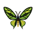 Cairns Birdwing PC Icon.png