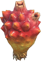 Sea Pineapple NH.png