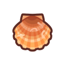 Scallop (sea creature)