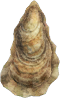 Oyster NH.png