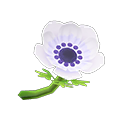 White Windflowers