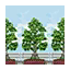 Tree-Lined Wall HHD Icon.png