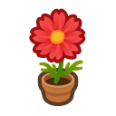 Red-Cosmos Plant