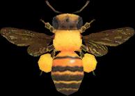 Honeybee NH.png