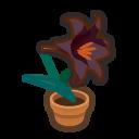 Black-Lily Plant