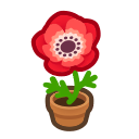 Red-Windflower Plant