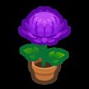 Purple-Mum Plant