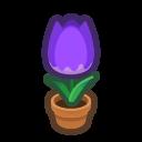Purple-Tulip Plant