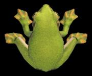 Frog NH.png