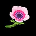 Pink Windflowers