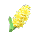 Yellow Hyacinths