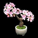 Cherry-Blossom Bonsai