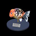 Ranchu Goldfish Model