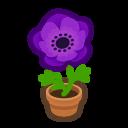 Purple-Windflower Plant