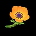 Orange Windflowers