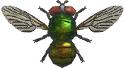 Fly NH.png