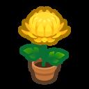 Yellow-Mum Plant