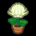 White-Mum Plant