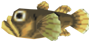 Freshwater Goby