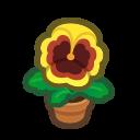 Yellow-Pansy Plant