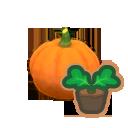 Pumpkin Start