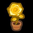 Gold-Rose Plant