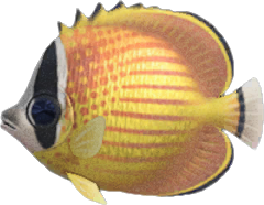 Butterfly Fish NH.png
