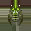Robust Cicada