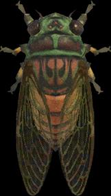 Evening Cicada NH.png