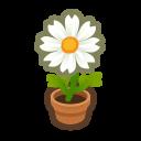 White-Cosmos Plant