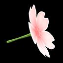 Cherry-Blossom Umbrella