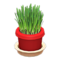 Cat Grass (Red) NH Icon.png