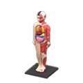 Anatomical Model NH Icon.png