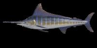 Blue Marlin NH.png