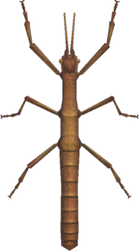 Walking Stick NH.png