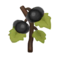 Black Pumpkin PC Icon.png