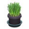 Cat Grass (Black) NH Icon.png