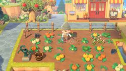 NH Growing Pumpkins Fall Update.jpg