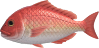 Red Snapper NH.png