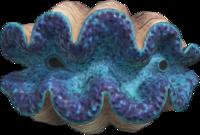 Artwork of Gigas Giant Clam