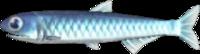 Anchovy (Fish) NH.png