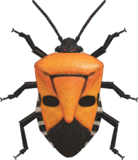 Man-Faced Stink Bug NH.png