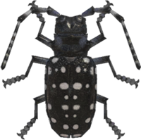 Citrus Long-Horned Beetle NH.png