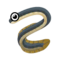 Eel PC Icon.png
